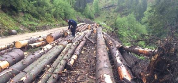 STUDIU: Industria silvică și de prelucrare a lemnului