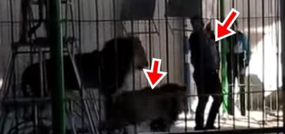 Homem morre durante ataque de leão