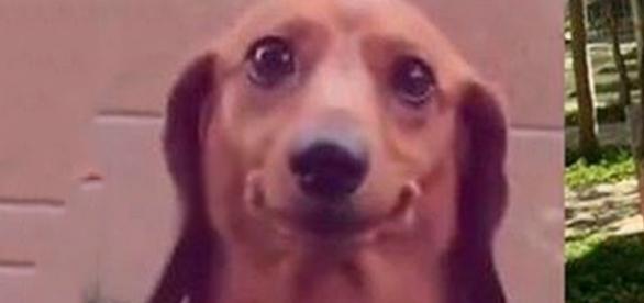 Cachorro parecido com famoso bomba na internet. (foto: reprodução / Facebook)
