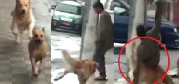 Cão sem freio derruba morador de rua em SP - Vídeo