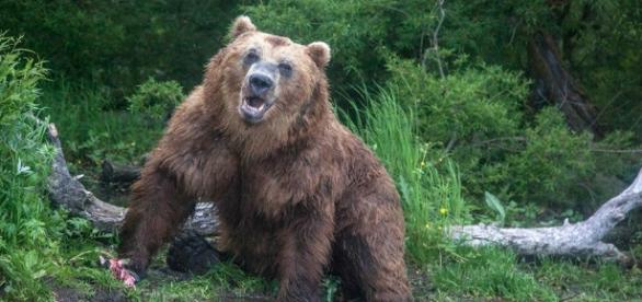 What is Russian reality TV show Game2: Winter, where will it be ... - thesun.co.uk