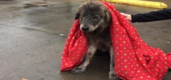 Cassie estava muito doente quando foi resgatada (Foto: Valinda Cortez)