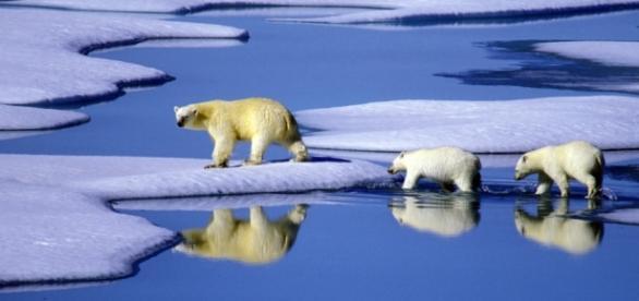 Shell will nicht mehr in der Arktis bohren - Wirtschaft ... - sueddeutsche.de