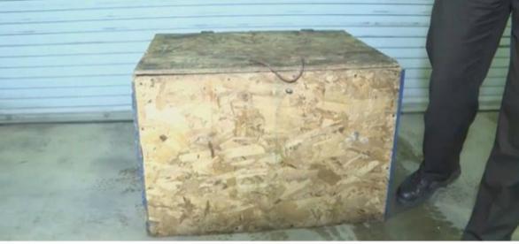 Menina de três anos vivia dentro dessa caixa