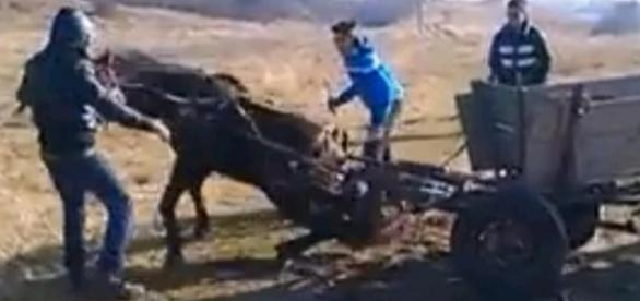 VIDEO: CAL BĂTUT cu bestialitate chiar în ziua de Crăciun, doar de amuzament