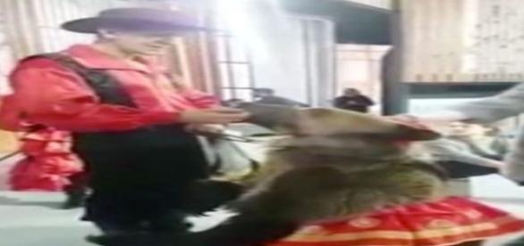 Enquanto animal é alimentado pelo adestrador, algo inesperado acontece (CEN)