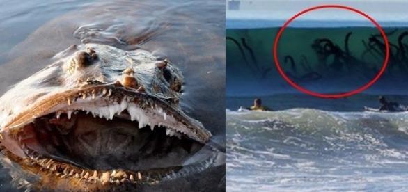 Pense duas vezes antes de entrar na água