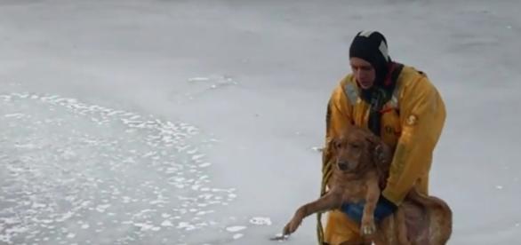 Cachorro sendo retirado de lago congelado
