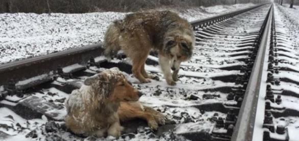 O exemplo de amor verdadeiro e lealdade dado por um cachorro