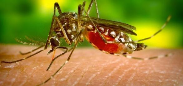 Zika Vírus: Sintomas e Prevenção no Ache Artigos - com.br
