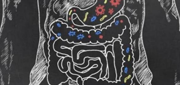 Parkinson pode começar no intestino