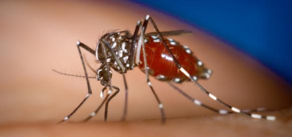 Zika: mesma categoria de preocupação que o Ebola.