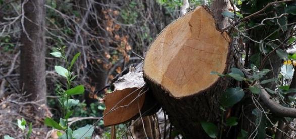Deforestación masiva en Albania