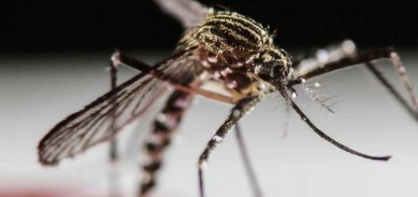 El virus se expande con rapidez extrema rapidez
