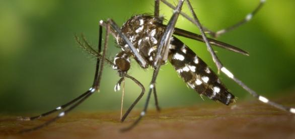 UNICAMP fará testes rápidos para Zika