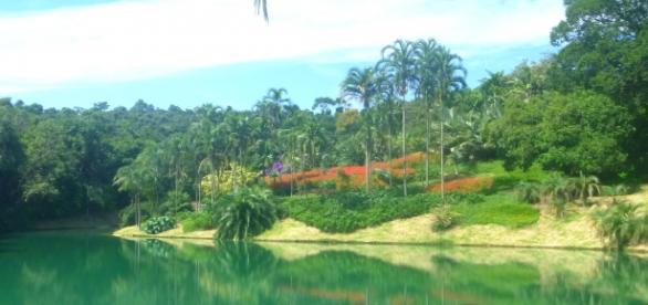 Inhotim e seus lagos e jardins, perfeita harmonia.