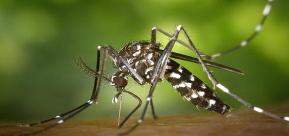 Campanha é lançada para erradicar Aedes Aegypti