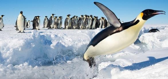 Mueren 150.000 pingüinos en la Antártida.