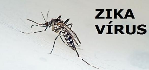 Mosquito transmissor de Dengue, Chikungunya e Zika