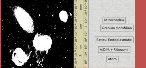 Teoria structurii electromagnetice a universului