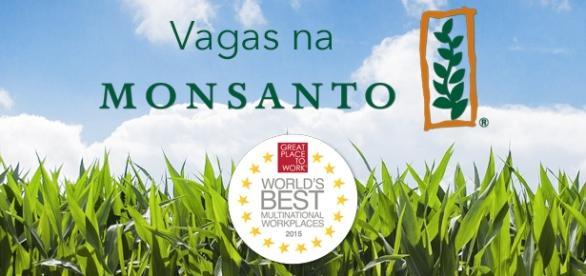 Monsanto está contratando em vários países