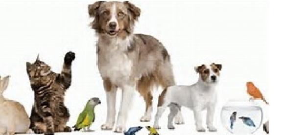 Una mascota para cada personalidad
