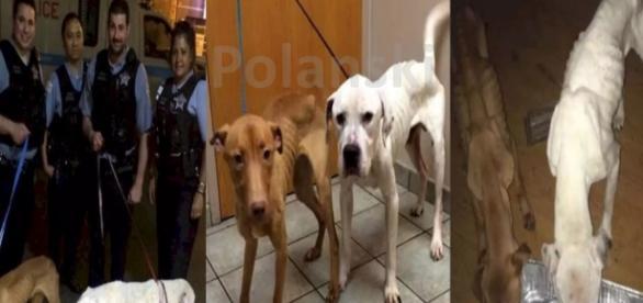 Cães foram resgatados pela polícia de Chicago