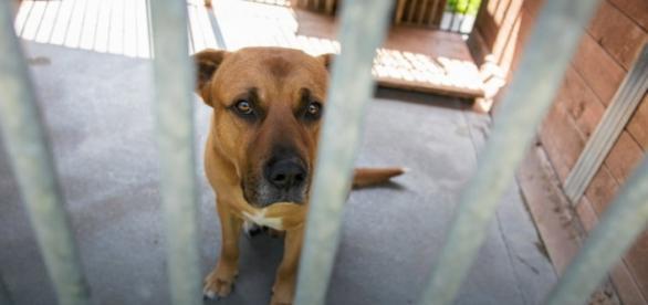 Co roku wysoka liczba przestępstw na zwierzętach.