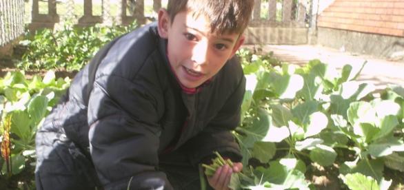 Iniciando uma horta orgânica na escola.