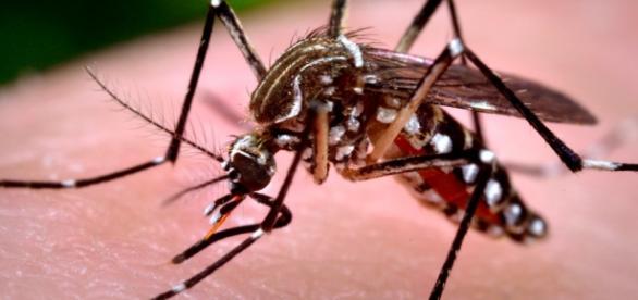 Zika tem potencial para ser transmitido por saliva