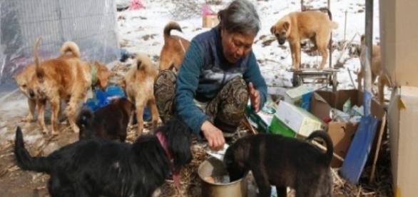 Foto: Lee Jin-man/AP-Jung salva animais há 26 anos