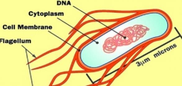 Iată cum arată bactreria E-coli