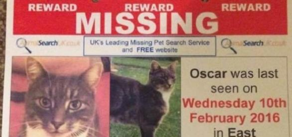 """Cartel de búsqueda del felino """"Oscar"""""""