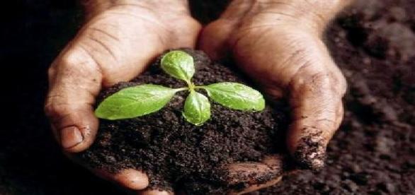 Agroalimentación nueva visión del Estado