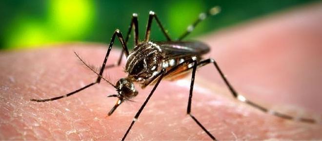 Dengue: El primer paso es la prevención