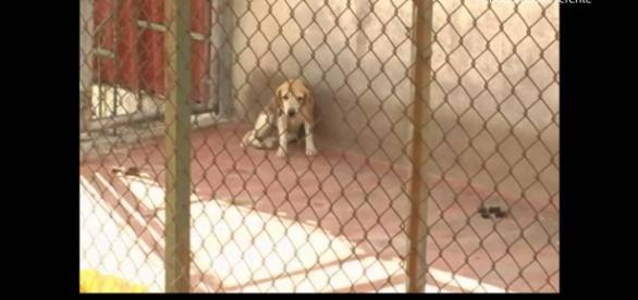 Maltrato animal: un delito contemplado por la ley