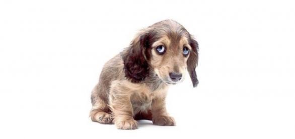 Adélia maltrata cães e revolta público do BBB16
