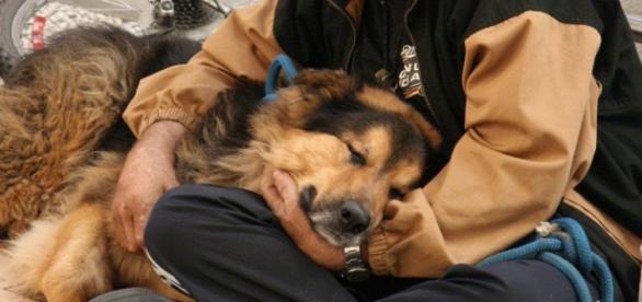 Cães têm o 'poder' de deixar as pessoas felizes