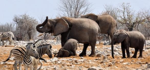 Wildlife under pressure. Courtesy Pixabay