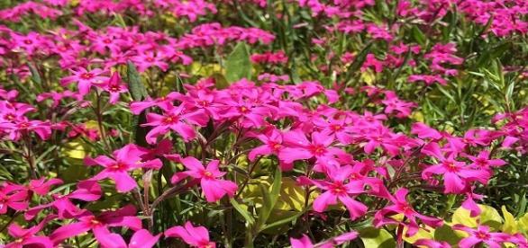 Fotografía de flores facilitada por Pixabay.com