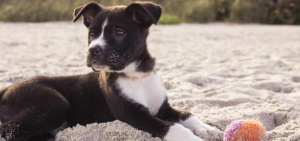 Nueva playa para perros a partir de junio