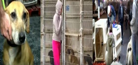 Danielle decidiu salvar os 250 cães abandonados