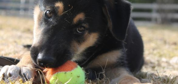 The 7 top reasons why dogs love us