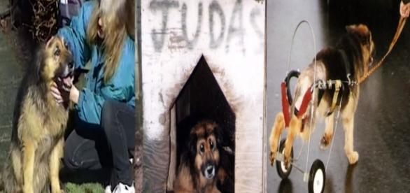 Judith foi chamada de 'Judas' e maltratada por 10 anos