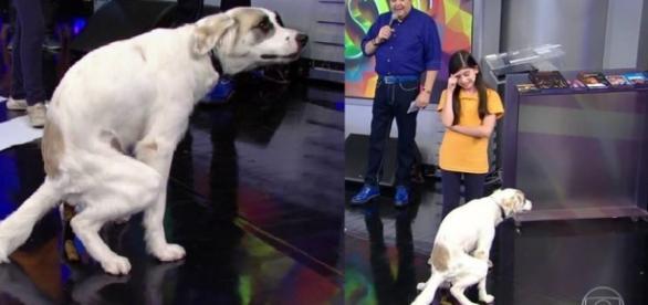 Faustão ficou sem reação diante do cachorro doidão