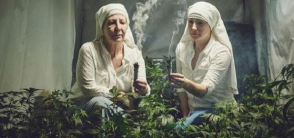 La plantación de marihuana de las monjas