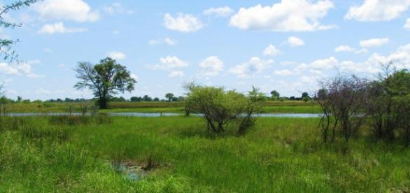 Kwando river, Bwabwata/Photo:J Flowers