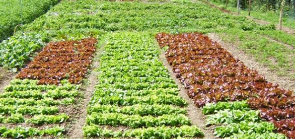 L 39 orto di marzo cosa piantare for Cosa piantare nell orto adesso