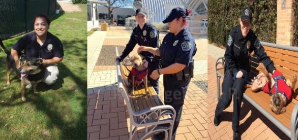 As policiais dedicam-se semanalmente aos cães do abrigo