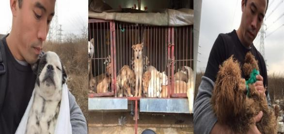 Fotos: Arquivo Marc Ching - Ativista se arrisca para salvar cães maltratados